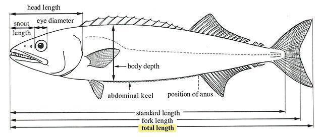 fishbase glossary