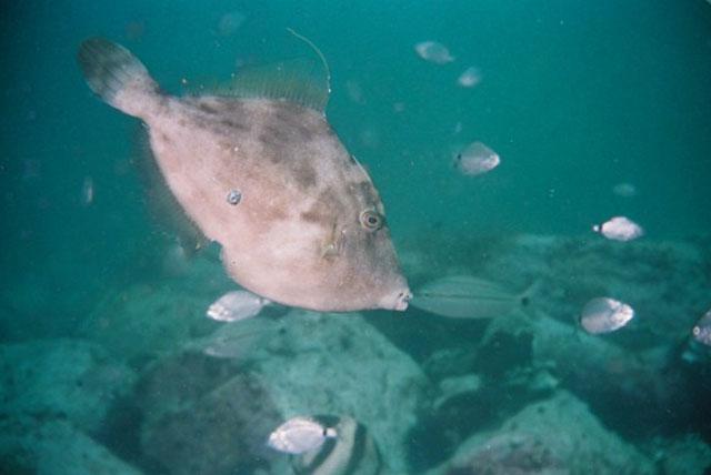 flatfish marine equipment